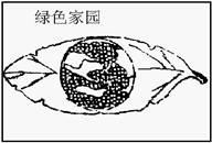 中国最美语文有感